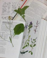 Pflanzen bestimmen – kinderleicht
