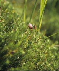 Biotoppflegeeinsatz im Moor