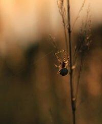 Spinnen auf der artenreichen Wiese