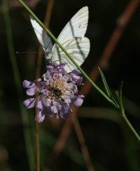 Auspflanzungsaktion im Schmetterlingshof